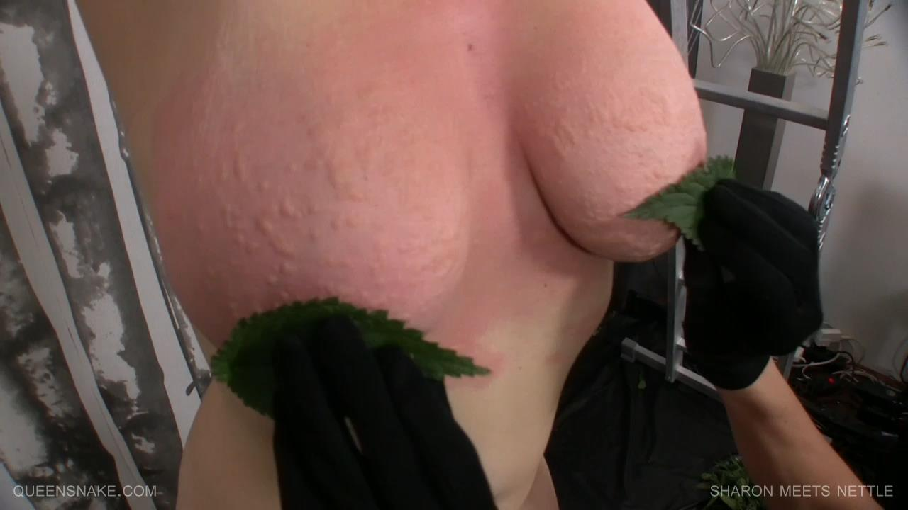 Animal Insertion Pussy Porn sharon meets nettle queensnake – dirtyporn.cc – dirtyporn